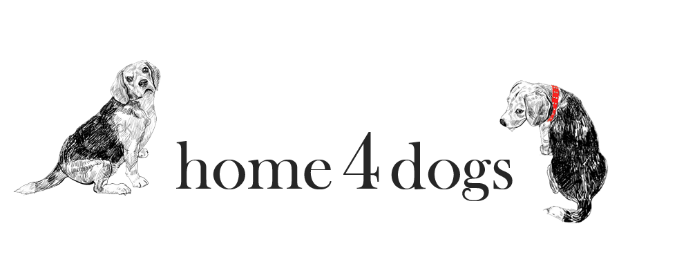 home4dogs