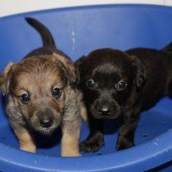 Hundefamilie neu im Tierheim