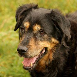 Spendenaufruf für unsere beiden Partner-Tierheime in Murcia/Spanien und in Boguszyce/Polen